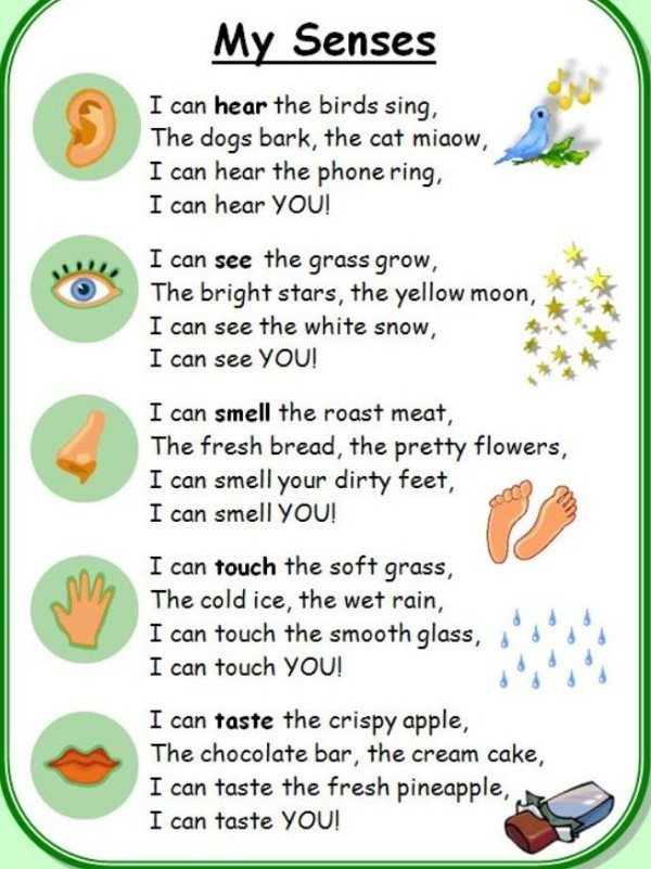 Get silly and learn about the five senses. I bet this will make your little one giggle!