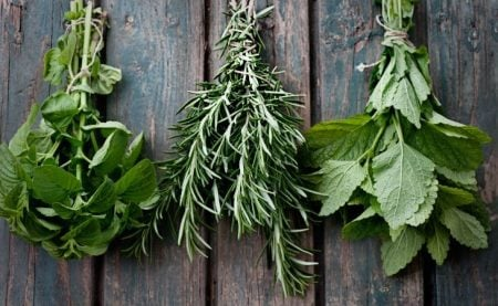 What are the Best Herbs for Pregnancy and Which Ones are Bad?