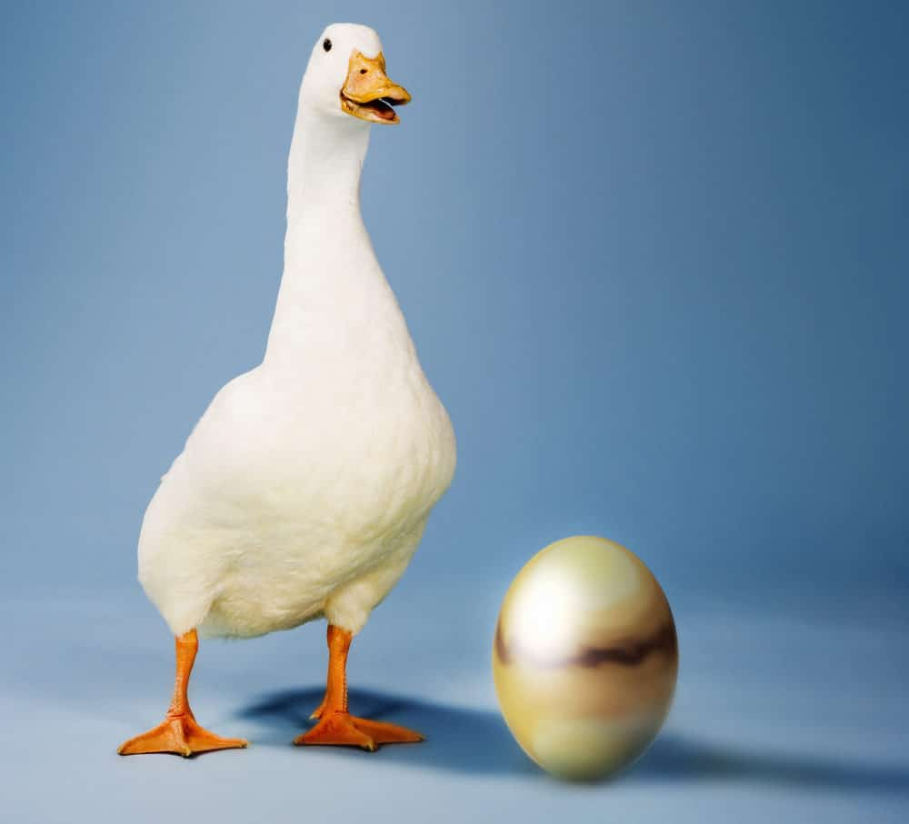 goose standing next to a golden egg