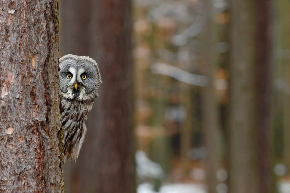 Wise looking owl