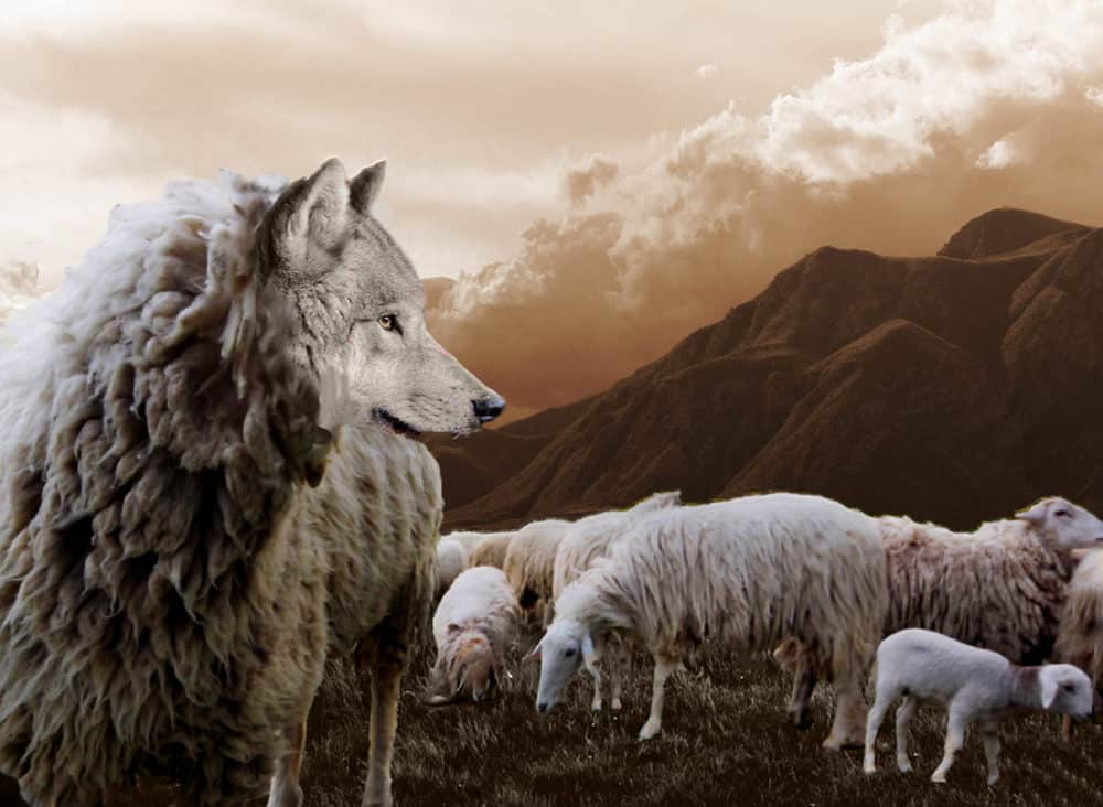wolf standing next to sheep