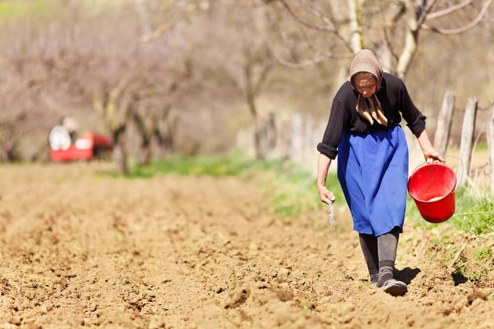 old woman planting seeds